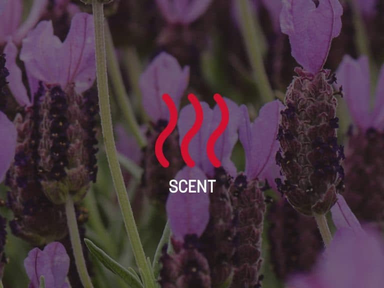 Distinguish Your Brand with Scent Marketing